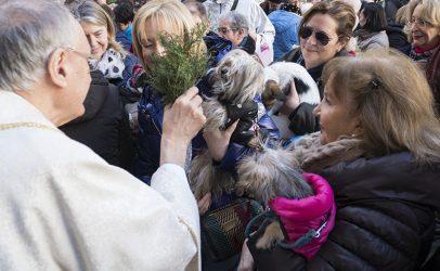 Los animales, protagonistas en la Fiesta de San Antonio Abad